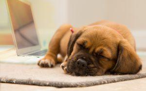 Süßer schlafender Hund